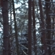 Sunset in the Wood Between the Trees Strains in Winter Period - VideoHive Item for Sale