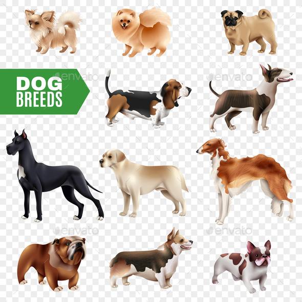 Dog Breeds Transparent Icon Set - Animals Characters
