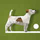 Pets Logo Reveal - VideoHive Item for Sale