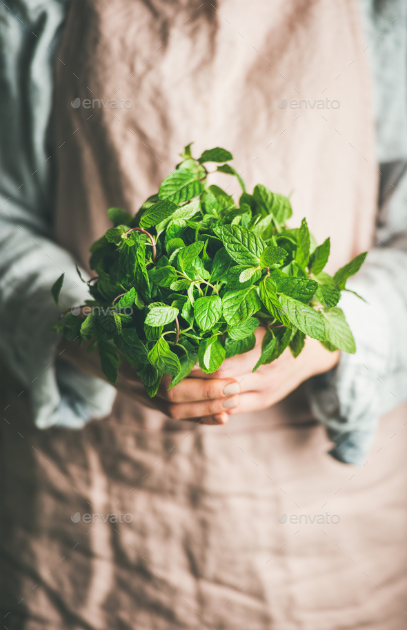Female farmer holding bunch of fresh green mint - Stock Photo - Images
