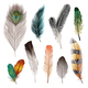 Bird Feathers Set - GraphicRiver Item for Sale
