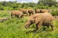 Baby Elephants in Nairobi National Park, Kenya - PhotoDune Item for Sale