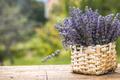Lavender - PhotoDune Item for Sale