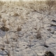 Frosty Winter Meadow on the East Sunrise - VideoHive Item for Sale