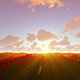 Sunset Over Tulip Field - VideoHive Item for Sale