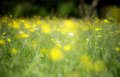 Abstract yellow flowers background with blurred flowers and boke - PhotoDune Item for Sale