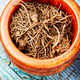 Valerian herb root - PhotoDune Item for Sale
