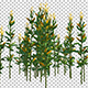 Corn Plant - VideoHive Item for Sale