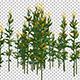 Corn Plant - VideoHive Item for Sale