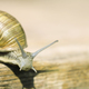 Slow snail - web banner with copy space - PhotoDune Item for Sale
