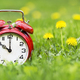 Summertime banner -  alarm clock and dandelion flowers - PhotoDune Item for Sale
