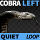 Cobra Left View Quiet - VideoHive Item for Sale