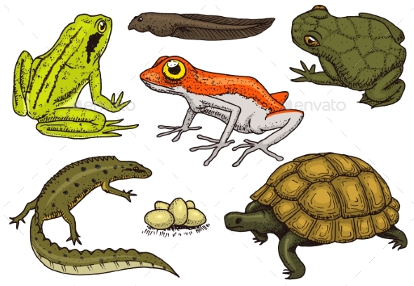 Reptiles and Amphibians Set - Animals Characters