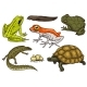 Reptiles and Amphibians Set - GraphicRiver Item for Sale
