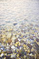 Stones in the river bed - PhotoDune Item for Sale