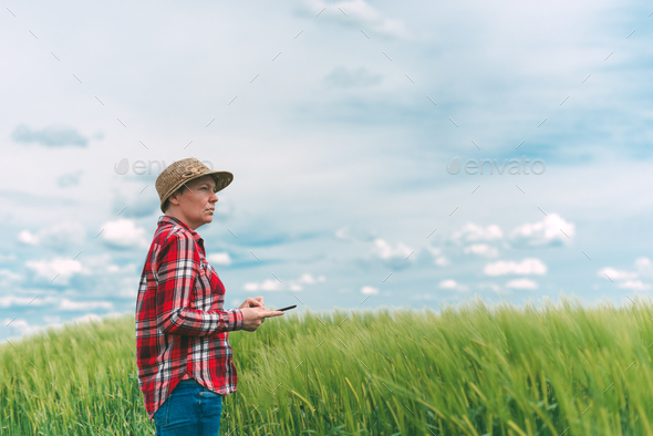 Farmer using digital tablet in wheat crop field - Stock Photo - Images