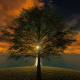 Tree At Sunset - VideoHive Item for Sale