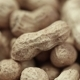 Lot of Groundnut Peanuts - VideoHive Item for Sale