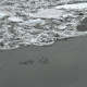 Frozen Ice River is Melting in Spring with Ice Flakes Flowing. Cracked Ice Floating on the River - VideoHive Item for Sale
