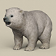 Game Ready Polar Bear Cub - 3DOcean Item for Sale