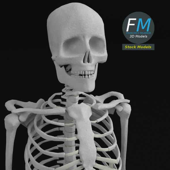 Anatomy - Complete Human Skeleton - 3DOcean Item for Sale
