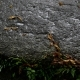 Heavy Rains Fall on a Rock in the Jungle - VideoHive Item for Sale