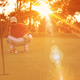 golf player aiming perfect  shot on beautiful sunset - PhotoDune Item for Sale