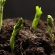 Growing Plant Agriculture - VideoHive Item for Sale
