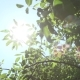 Bright Sun Rays and Foliage - VideoHive Item for Sale
