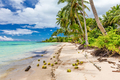 Wild beach with palm trees and coconuts on south side of Upolu, - PhotoDune Item for Sale