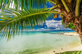 Beach with palm tree on the north side of tropical Moorea island - PhotoDune Item for Sale