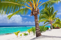 Palm trees overlooking tropical beach on Roratonga, Cook Islands - PhotoDune Item for Sale