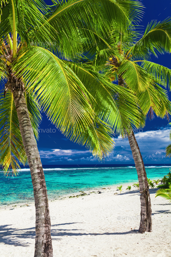 Tropical beach with rocks and palms on Cook Islands, Rarotonga - Stock Photo - Images