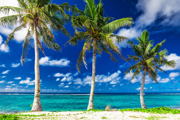 Tropical Lalomanu beach on Samoa Island with three palm trees, U - Stock Photo - Images