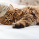 Ill cat lying with high temperature - PhotoDune Item for Sale