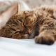 A ginger cat sleeps in his soft cozy bed on a floor carpet - PhotoDune Item for Sale