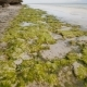 Flowering Algae on the Coast of the Island of Bohol. Philippines. Evening Time - VideoHive Item for Sale