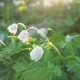Forest Flowers at Dawn - VideoHive Item for Sale