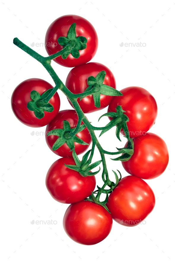 Regina tomatoes on the vine, paths - Stock Photo - Images