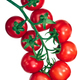 Regina tomatoes on the vine, paths - PhotoDune Item for Sale