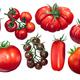 Italian tomatoes, different varieties, paths - PhotoDune Item for Sale