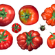 Tomatoes calyx up, top view, paths - PhotoDune Item for Sale