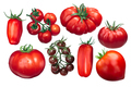 Italian tomatoes, different varieties, paths - PhotoDune Item for Sale