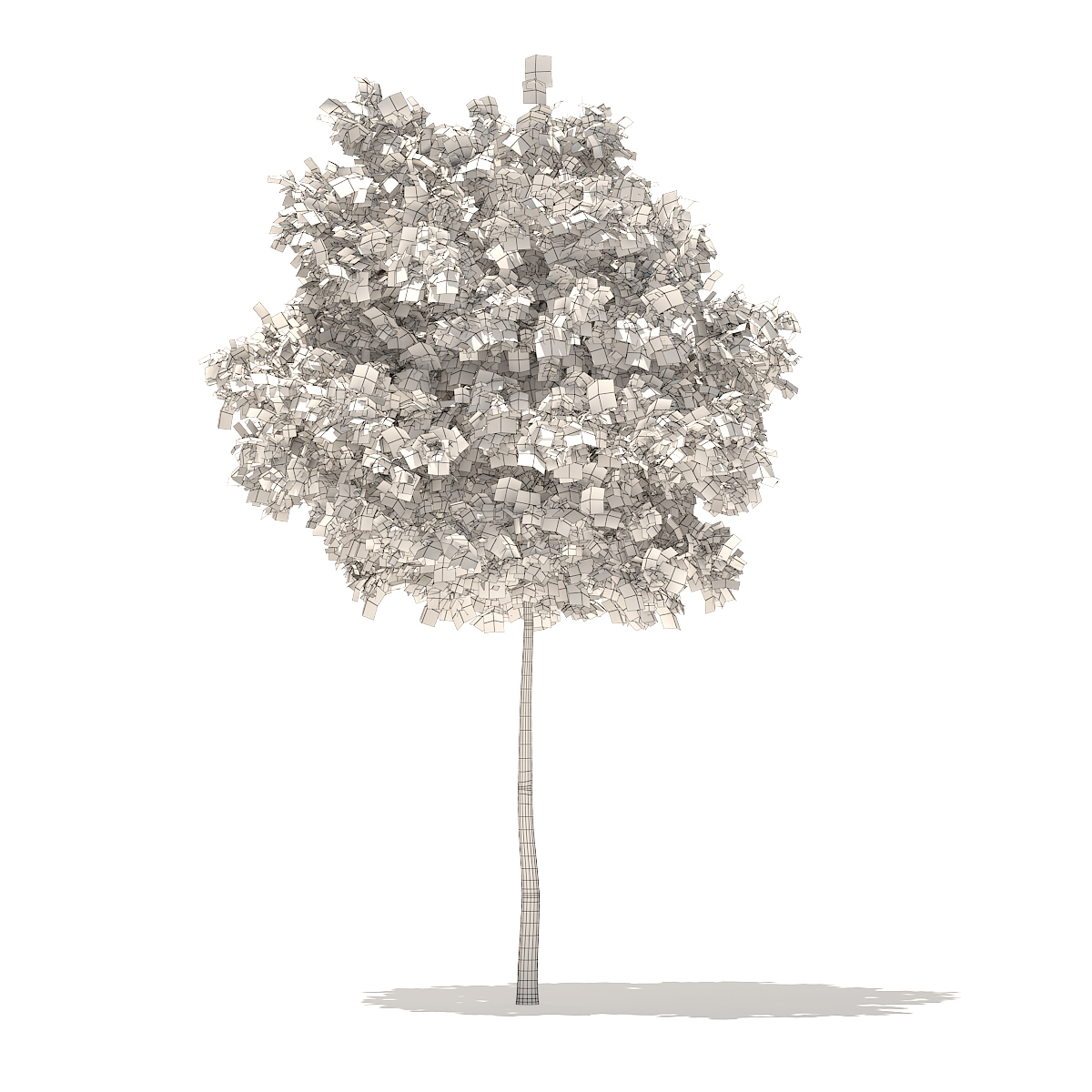 Sugar Maple 3D Model 5.2m