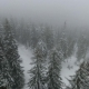 Drone Flies over the Coniferous Forest during a Blizzard - VideoHive Item for Sale