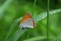 Beautiful butterfly sitting on leaf - PhotoDune Item for Sale