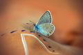Close up of Beautiful butterfly - PhotoDune Item for Sale