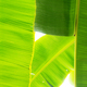 banana leaves at sky - PhotoDune Item for Sale
