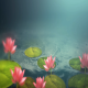 Lotus Flower - VideoHive Item for Sale