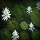 Water And Flowers - VideoHive Item for Sale